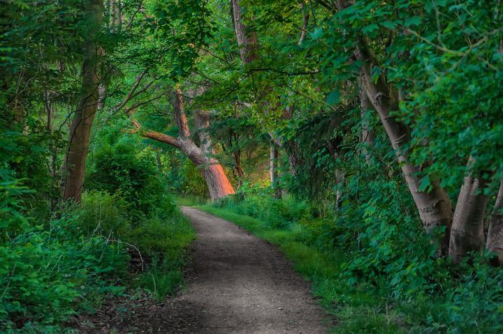 Grønt område i Esbjerg Kommune