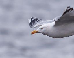 Billeder af dyr i Danmark