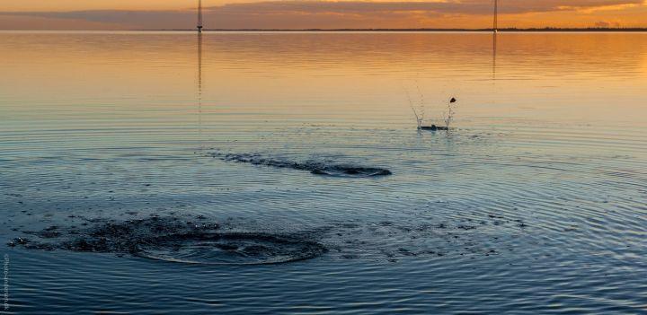 Smutter i vandet ved Esbjerg