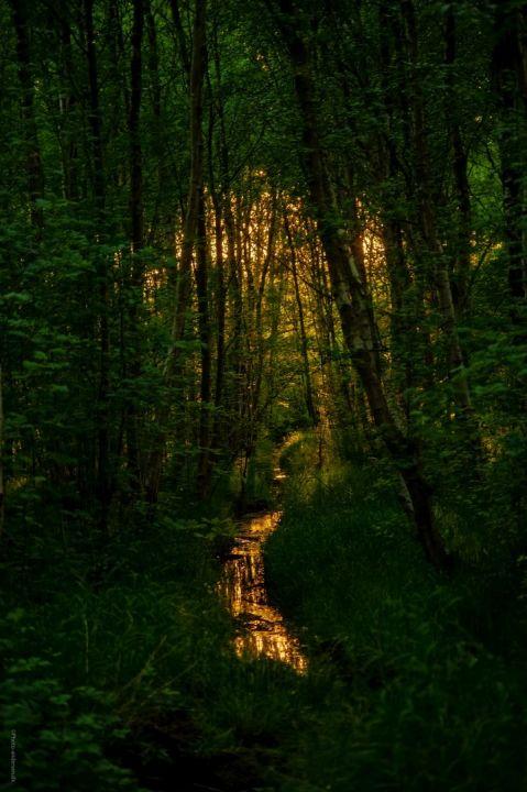 Solnedgang i skoven i Esbjerg kommune
