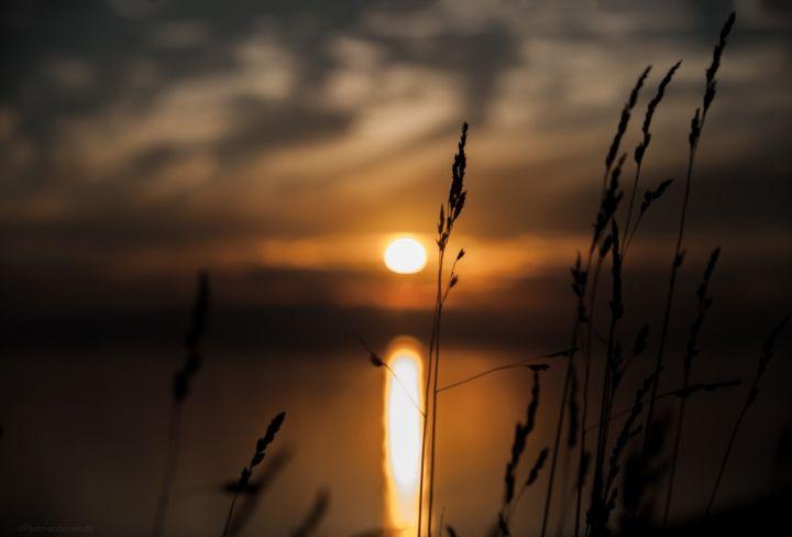 Strå i solnedgang ved Sædding strand