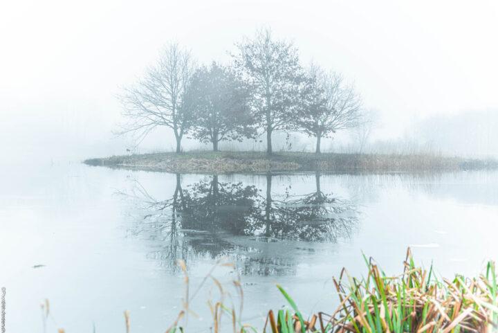 Den gamle fiskesø, er blevet et stort natur område i Tjæreborg, efter at fiskesøen blev lukket.