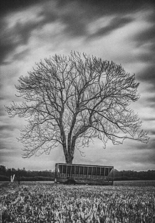 Træ tæt på Vester Nebel i Esbjerg, kreaturvognen i forgrunden er forfaldende og gammel.